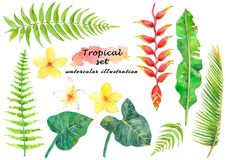 Watercolor tropical set with leaves and beautiful flowers. Hand drawn illustration isolated on white background Royalty Free Stock Photos