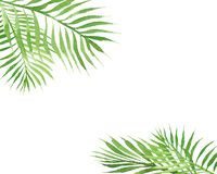 Watercolor tropical simple border frame with palm tree leaves isolated on white background stock illustration