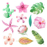 Watercolor tropical summer flowers and leaves stock illustration