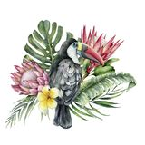 Watercolor tropical toucan and flowers bouquet. Hand painted bird, protea and plumeria isolated on white background royalty free illustration