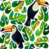 Watercolor tropical toucans and monstera leaves on white background. vector illustration
