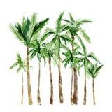 Watercolor tropical trees, sea coast. Africa summer palm trees jungle savannah illustration for the banner, frame, border, logo
