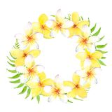 Watercolor tropical wreath with plumeria flowers and leaves. Can be used for cards, wedding invitation, save the dat. Watercolor tropical wreath with white and stock illustration