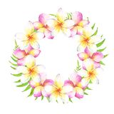 Watercolor tropical wreath with plumeria flowers and leaves. Can be used for cards, wedding invitation, save the dat. Watercolor tropical wreath with white and vector illustration