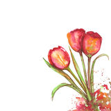 watercolor tulip flowers vector illustration