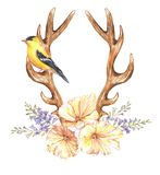 Watercolor tulip flowers, hyacinth, bird and antlers. Beautiful illustration with the watercolor tulip flowers, hyacinth, bird and antlers. Floral composition in Stock Illustration