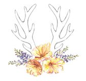 Watercolor tulip flowers, hyacinth and sketch antlers. Beautiful illustration with the watercolor tulip flowers, hyacinth and sketch antlers. Floral composition Vector Illustration