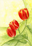 Watercolor. Tulips. Beautiful flowers for your design royalty free illustration