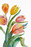 Watercolor Tulips flowers Stock Images