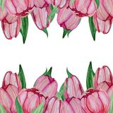 Hand drawn Watercolor tulips template royalty free illustration