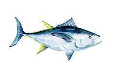 Watercolor Tuna fish isolated. Stock Photos
