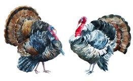 Watercolor Turkey Royalty Free Stock Photos