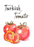 Watercolor turkish tomato. Watercolor hand drawn turkish tomato - Illustration Stock Image