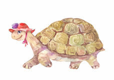 Watercolor turtle, vector illustration Royalty Free Stock Images