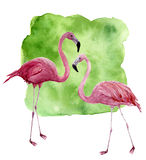 Watercolor two flamingo. Hand painted pink bird illustration with green background isolated on white background Stock Photo