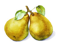 Watercolor with two pears stock photos