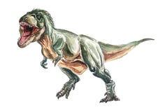 Watercolor Tyranosaurus Stock Photos