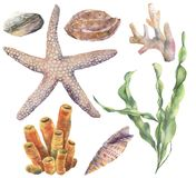 Watercolor underwater set. Hand painted laminaria, corals, starfish, sea pebble and seashells isolated on white Royalty Free Illustration