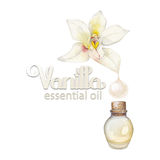 Watercolor vanilla oil Royalty Free Stock Photography