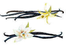 Watercolor vanilla and orchid Royalty Free Stock Photo