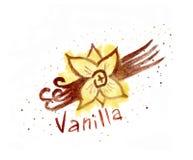 Watercolor vanilla. vanilla pods watercolor. Watercolor vanilla. vanilla pods watercolor Stock Image