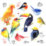 Watercolor a variety of birds Royalty Free Stock Photos