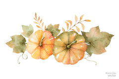 Watercolor vector autumn bouquet of leaves, branches and pumpkins isolated on white background. vector illustration
