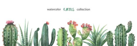 Watercolor vector banner of cacti and succulent plants isolated on white background. Stock Photography