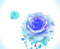 Watercolor vector blue rose Royalty Free Stock Image