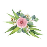 Watercolor vector bouquet with green eucalyptus leaves and branches. Stock Image