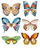 Watercolor vector butterflies Stock Images