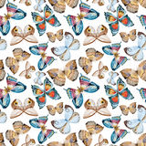 Watercolor vector butterfly pattern Stock Image