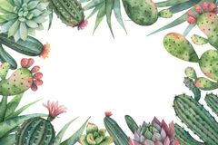 Watercolor vector card of cacti and succulent plants isolated on white background. Stock Image