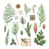 Watercolor vector Christmas set with evergreen coniferous tree branches, berries and leaves. Illustration for your holiday design isolated on a white vector illustration