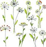 Watercolor vector floral set Stock Photo