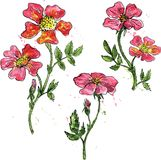 Watercolor vector floral set. Vector floral set of brier flowers colored by watercolor with paint stains, hand drawn design elements Stock Photography