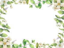Watercolor vector frame of flowers and branches Jasmine isolated on a white background. Floral illustration for design greeting cards, wedding invitations Royalty Free Stock Images