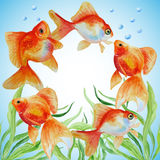 Watercolor vector frame with hand drawn goldfishes Stock Photo