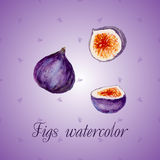 Watercolor vector fruits. Fig. For design of packaging, food, vegan or diet background Stock Photo