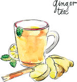 Watercolor vector ginger tea. Watercolor hand drawn helpful ginger tea - vector Illustration Stock Image
