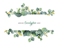 Watercolor vector green floral banner with silver dollar eucalyptus leaves and branches isolated on white background. Watercolor vector hand painted green Stock Photography