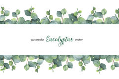 Watercolor vector green floral banner with silver dollar eucalyptus leaves and branches on white background. royalty free illustration