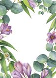 Watercolor vector green floral card with eucalyptus leaves, purple flowers and branches isolated on white background. Watercolor vector hand painted green Stock Images