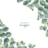 Watercolor vector green floral card with silver dollar eucalyptus leaves and branches on white background. stock illustration