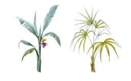 Watercolor vector hand drawn palms. Beautiful vector illustration with watercolor hand drawn tropical palms Royalty Free Stock Photo
