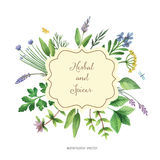 Watercolor vector hand painted banner with herbs and spices. Stock Image
