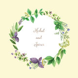 Watercolor vector hand painted frame with herbs and spices. Stock Photography