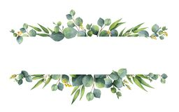 Watercolor vector green floral banner with silver dollar eucalyptus leaves and branches isolated on white background. Watercolor vector hand painted green Royalty Free Stock Photography