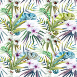Watercolor vector pattern reptiles chameleon Stock Image