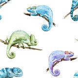 Watercolor vector pattern reptiles chameleon Stock Photography